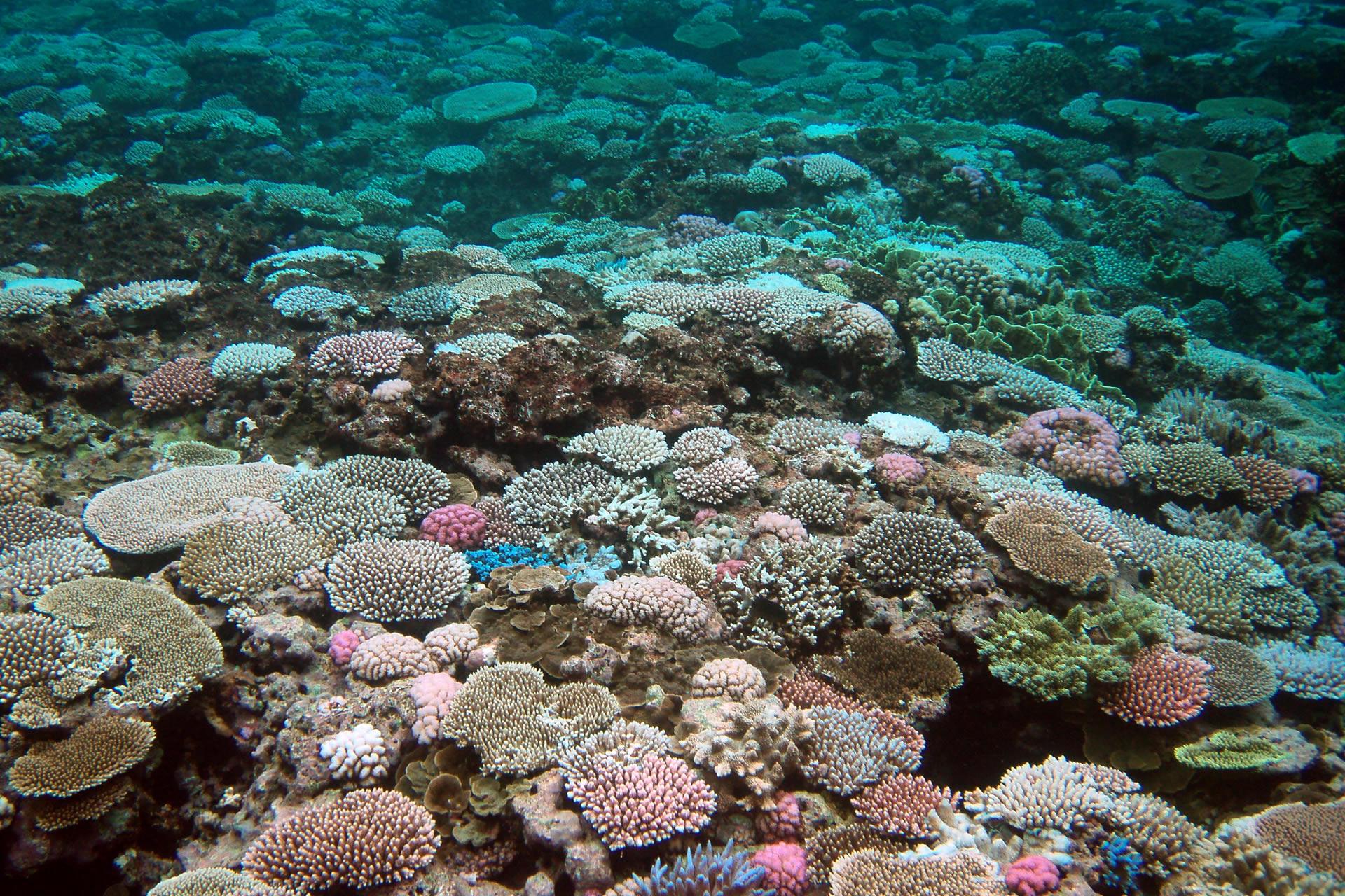 夏の思い出~沖縄・宮古島の珊瑚