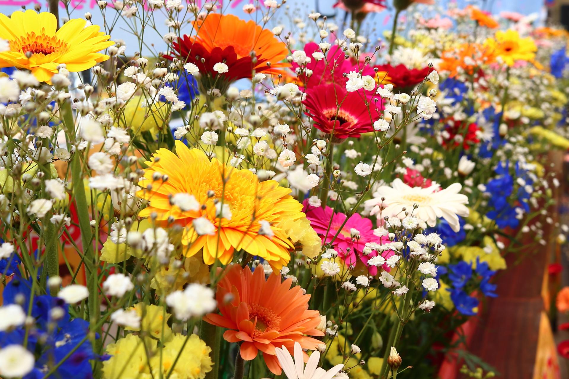 プランターに咲いている花