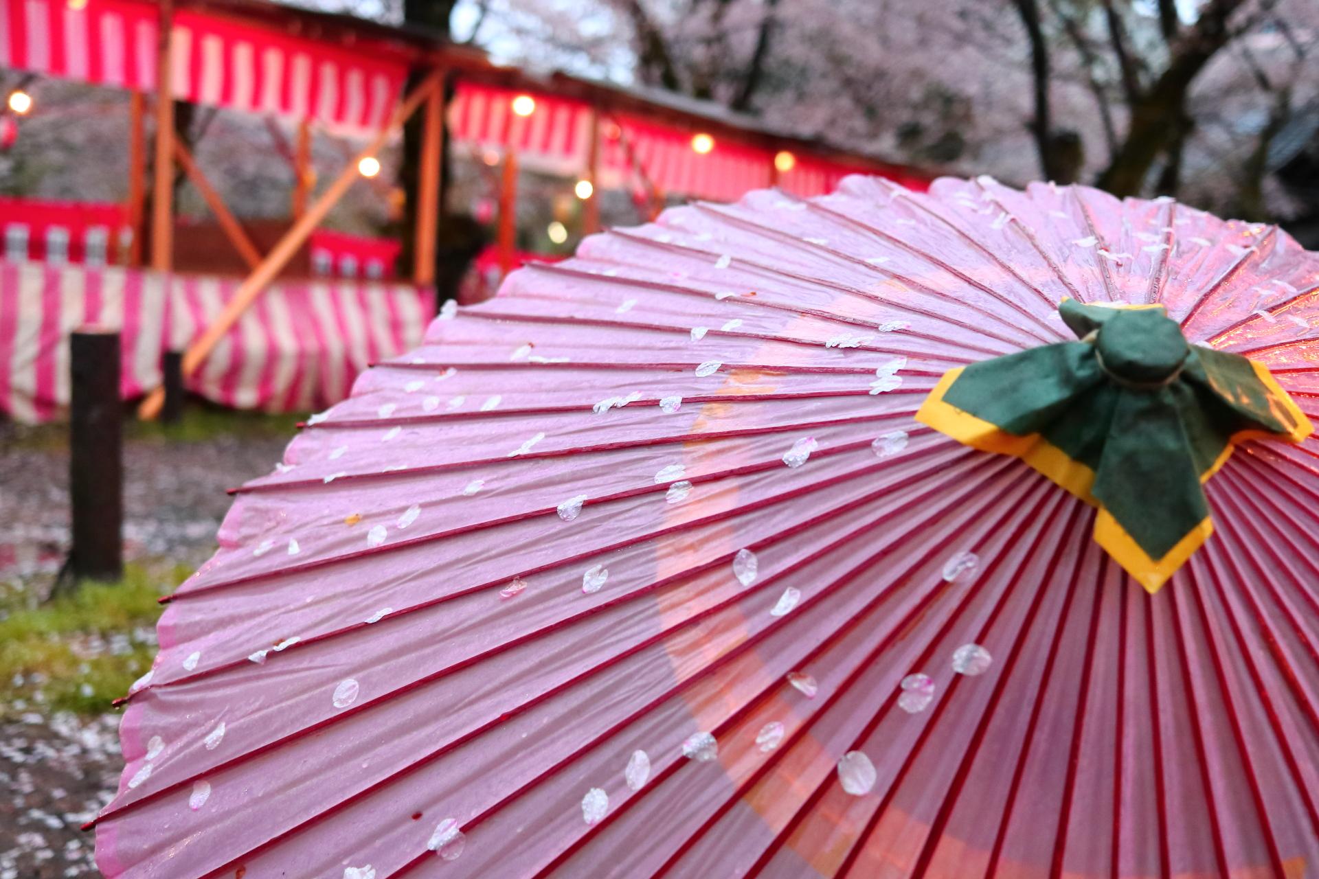 番傘と紅白幕と桜