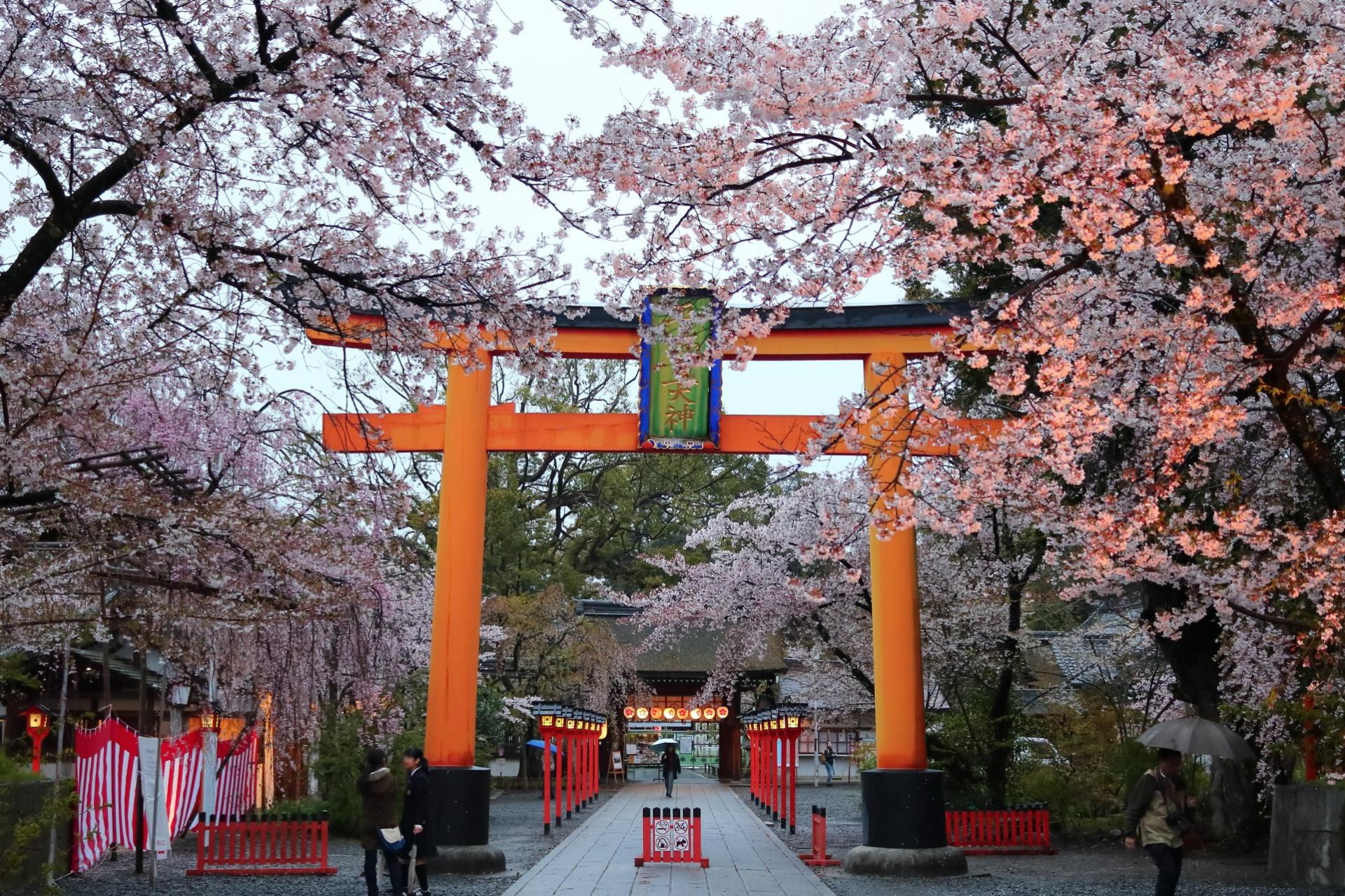 江戸時代「平野の夜桜」として知られた平野神社(ひらのじんじゃ)京都・北区