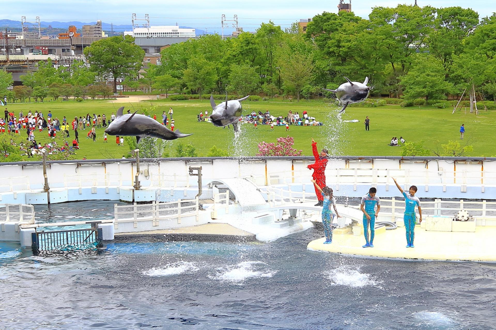 梅小路京都西駅からすぐ!京都水族館のイルカパフォーマンス