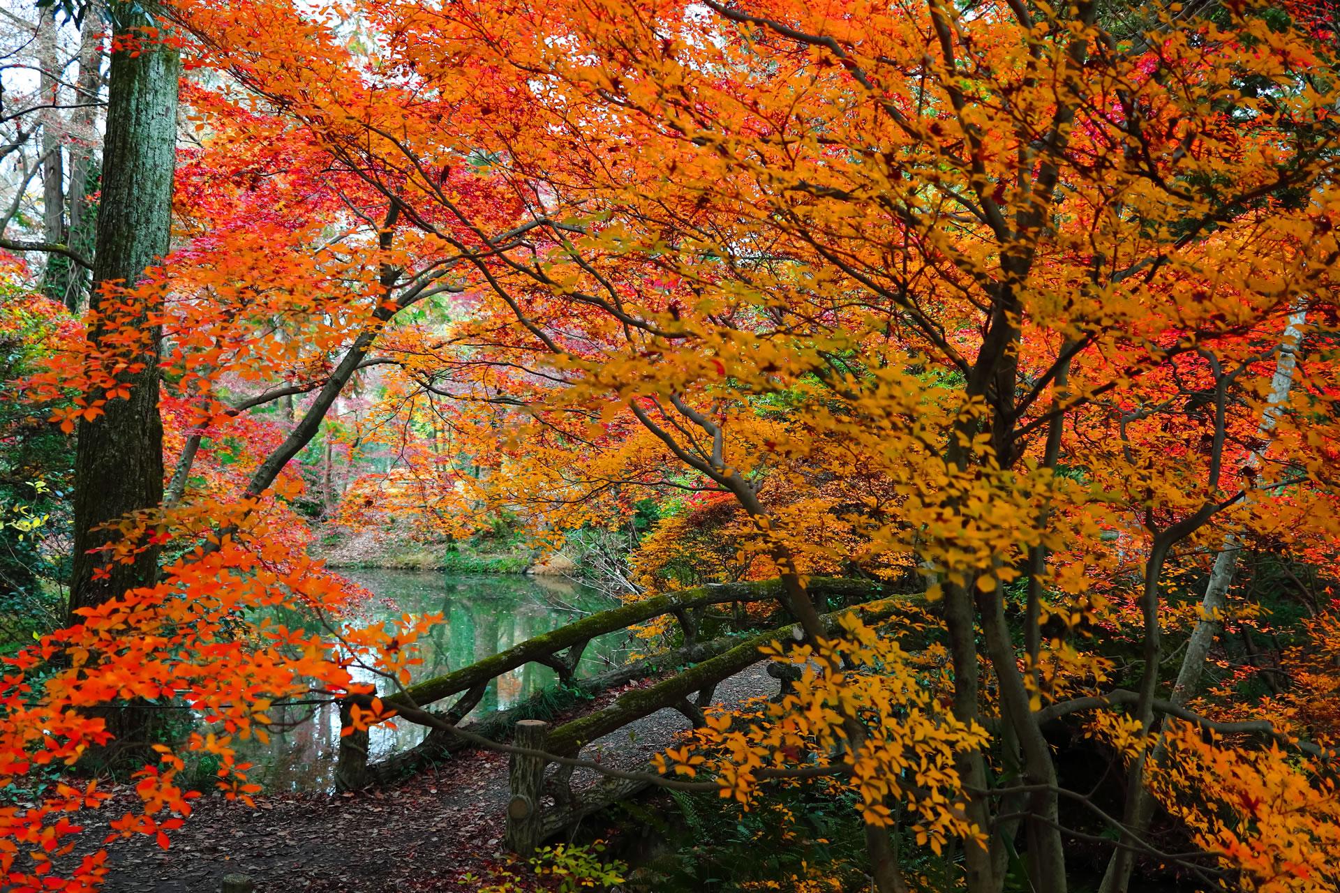 京都府立植物園 なからきの森