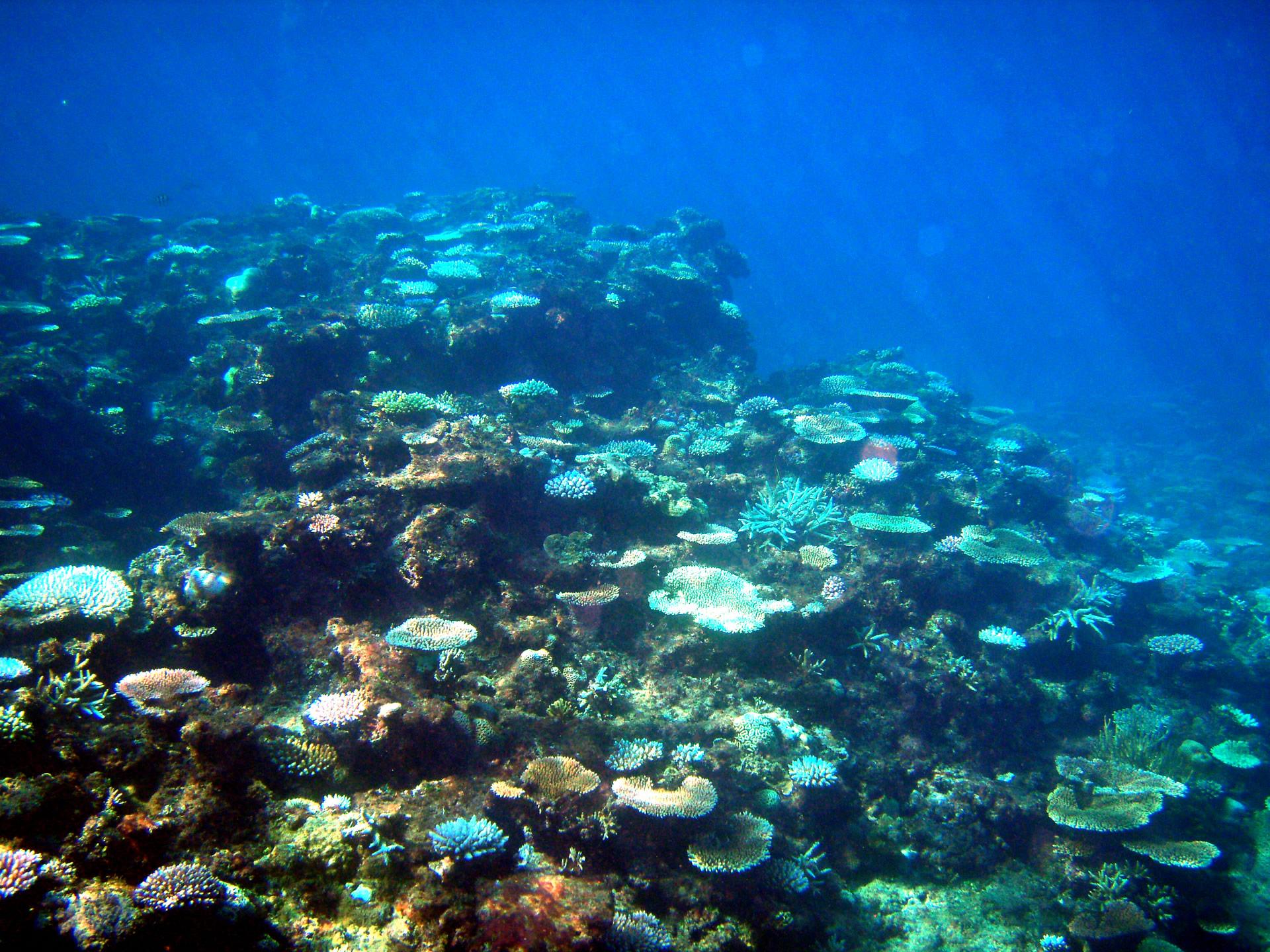 沖縄・宮古島の珊瑚(八重山)
